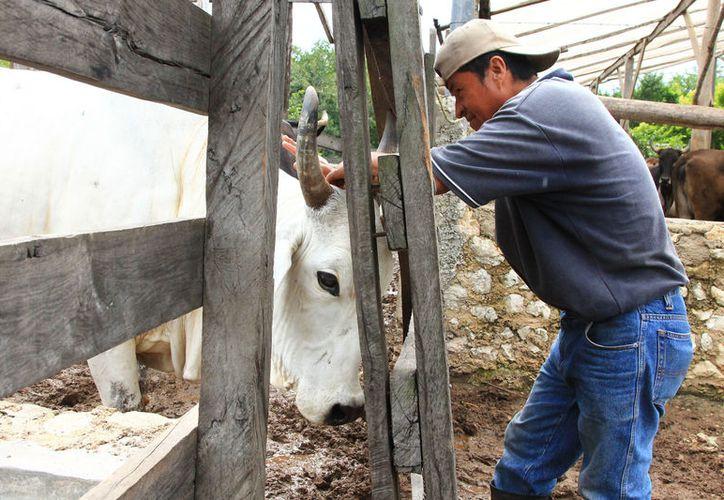 Facilitan trámites a productores ganaderos del municipio de Solidaridad. (Cortesía)
