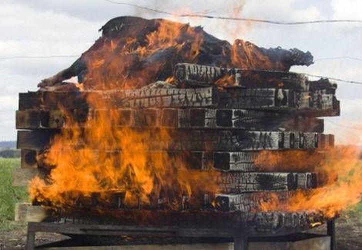 Los científicos consideran improbable que los miembros del crimen organizado hayan conseguido las toneladas de madera necesarias para incinerar los cuerpos de los 43 estudiantes de Ayotzinapa. (Milenio)