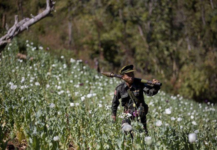 Un oficial del Ejército de Liberación Nacional Taang lleva un lanzagranadas propulsadas por cohetes sobre su hombro mientras caminaba por un campo de amapolas. (Agencias)