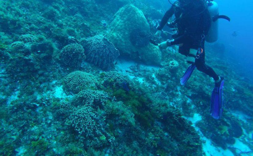 La mayoría de los buzos prefieren visitar las esculturas sumergidas, lo cual evita daños en los arrecifes de coral. (Luis Soto/SIPSE)