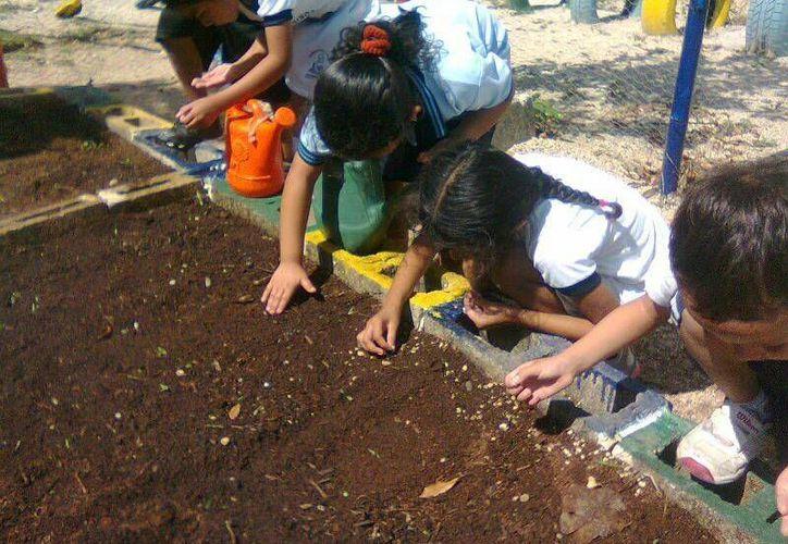A través de la enseñanza del cultivo de hortalizas, se busca sembrar en los niños el cuidado del medio ambiente.  (Luis Ballesteros/SIPSE)