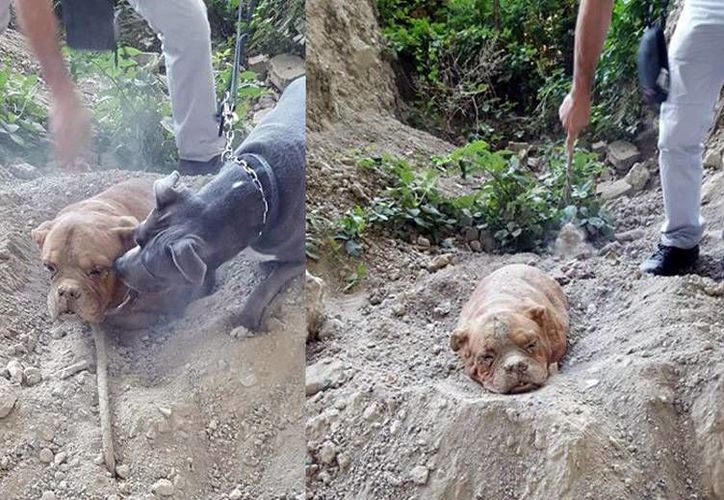Imagen del perro al momento de ser rescatado. El dueño de la mascota podría ser condenado a dos años de prisión. (Facebook Pedro Dinis)