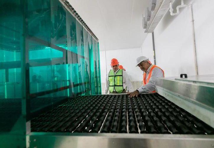 Se espera que este año con la puesta en marcha de todos los proyectos de Bachoco, el Estado despunte en la exportación de piezas al extranjero. (SIPSE)