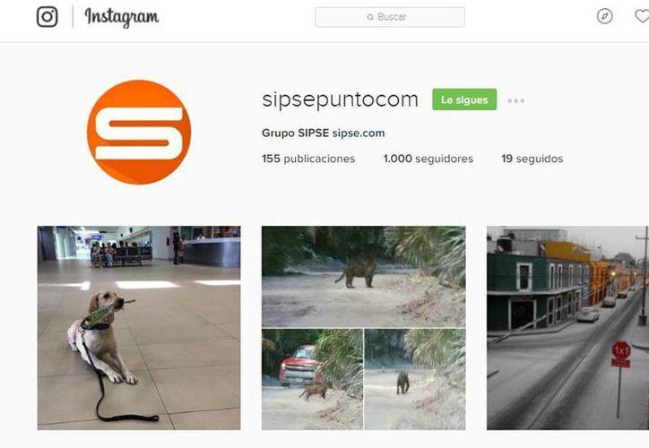 Instagram estrena nueva imagen y actualiza su logotipo. (Captura de pantalla)