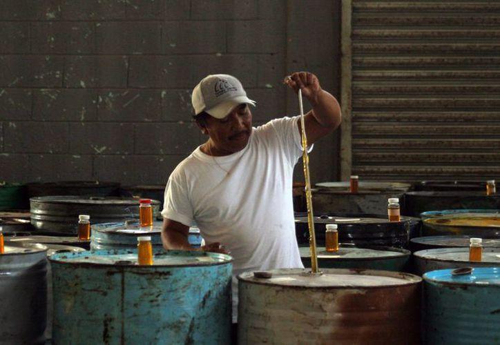 Yucatán no solo tiene éxito en la exportación de miel (foto) y chile habanero. Ahora abarca nuevos mercados con productos del campo como la pitahaya. (SIPSE)