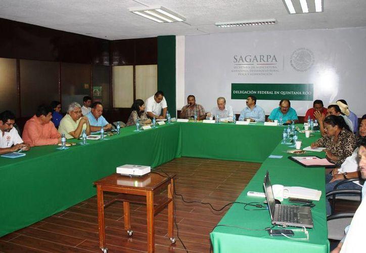 La Sagarpa instalará 13 ventanillas en las comunidades cañeras para que acudan los productores. (Edgardo Rodríguez/SIPSE)