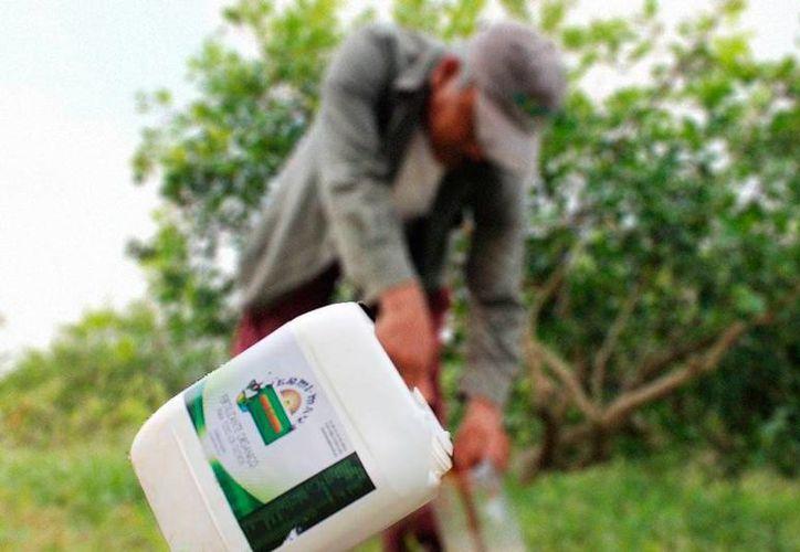 El Gobierno de Yucatán informó que se realizará una campaña de recolección de envases de agroquímicos (plaguicidas) en todo el Estado. La imagen es únicamente de contexto. (SIPSE)