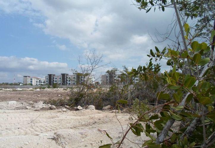 Aspectos del predio ubicado a un costado de Punta Esmeralda, conocida como Mox Che. (Yenny Gaona/SIPSE)