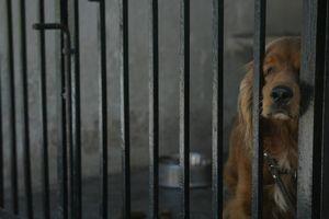 Piden modificar la Ley de Protección Animal