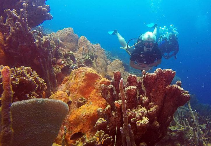 Fotografía cedida por la Fundación Diving Planet en la que se obervan instructores con turistas y buzos que visitan Cartagena. Colombia. (EFE)