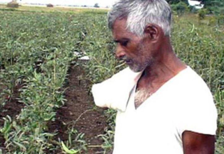 Autoridades piden a los agricultores que no acudan al extremo de quitarse la vida y prometió ayuda financiera. (Agencias/Archivo)