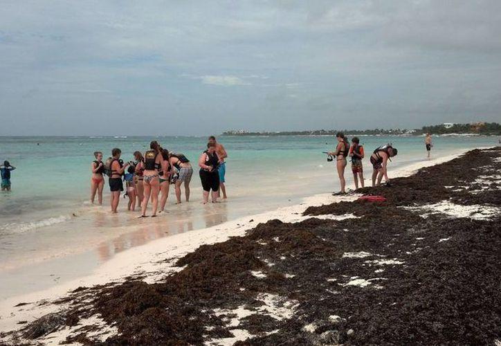 Los hoteleros de Tulum proponen buscar medidas para reutilizar el sargazo que recala en los arenales. (Sara Cauich/SIPSE)