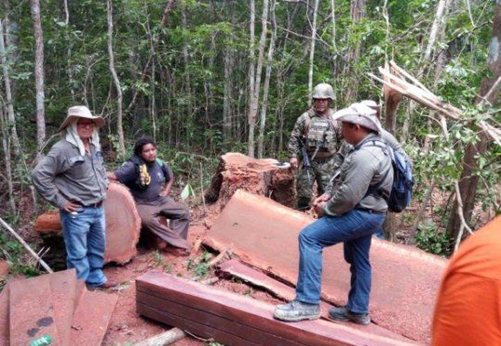 Los inspectores federales aseguraron mil 135 metros cúbicos de madera de Chico Zapote. (Profepa)