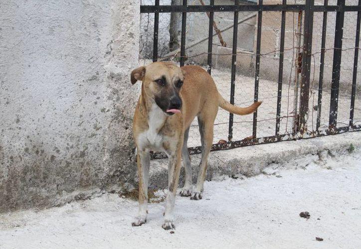 Dan a conocer la ley de protección a las mascotas. (Sergio Orozco/SIPSE)