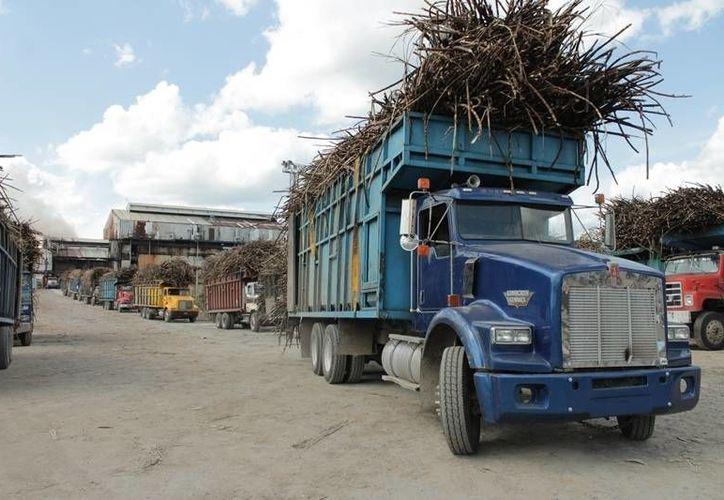 Los productores y el ingenio ya trabajan a marchas forzadas para poder llevar a la industria las poco más de 180 toneladas de caña. (Edgardo Rodríguez/SIPSE)