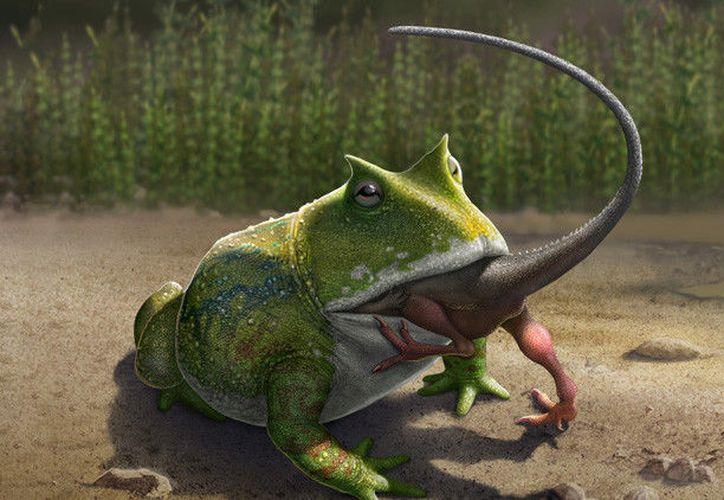 La especie conocida como 'Beelzebufo', podría cazar y devorar pequeños ejemplares de dinosaurios. (Foto: RT)