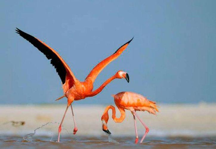 Las aves de Yucatán han 'tomado vuelo' como atractivo turístico, debido a una tendencia hacia el ecoturismo. La imagen es de contexto. (Milenio Novedades)
