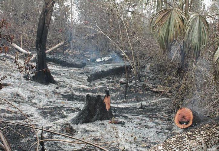 Se presume que los incendios fueron provocados por intereses para el cambio de uso de suelo. (Edgardo Rodríguez/SIPSE)