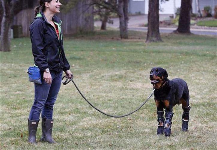 En esta fotografía del 2 de abril de 2015, Laura Aquilina pasea con su perro Brutus, de la raza Rottweiler, al que recientemente le pusieron prótesis en las cuatro patas. (Foto: AP)