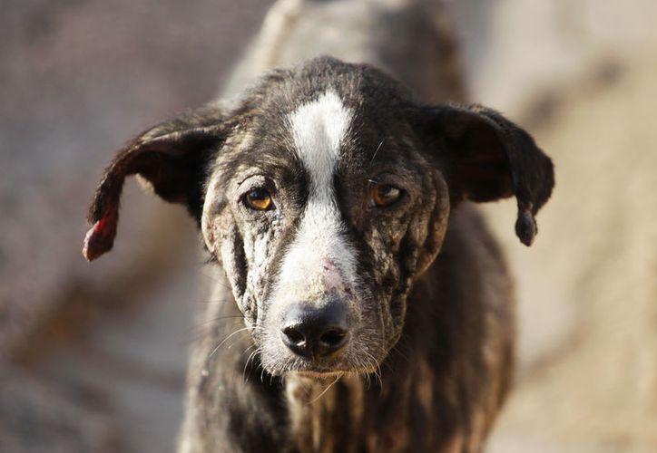 Unos perros en China no se alejaron del cuerpo de uno de los canes que fue atropellado. (Foto: Vanguardia)