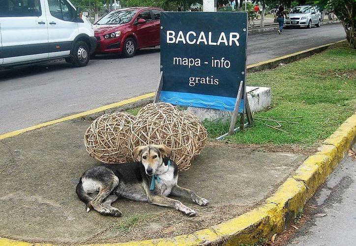 Buscan evitar la proliferación de perros y gatos en el Pueblo Mágico. (Javier Ortiz/SIPSE)
