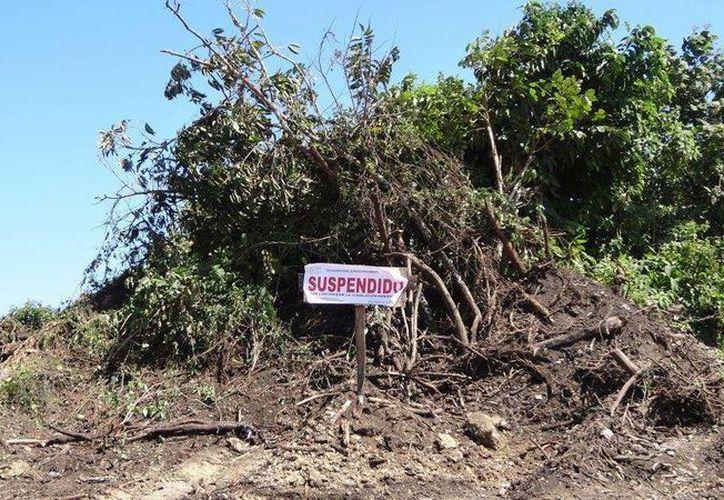 Quintana Roo está dentro de los 16 Estados que sí cuentan con una Procuraduría Ambiental. (Israel Leal/SIPSE)
