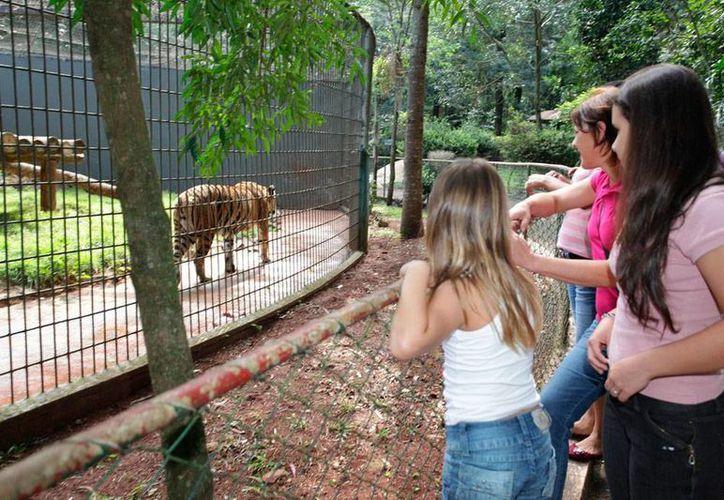 A su llegada al zoológico de Cascavel, hace 3 años, Hu causó sensación; hoy vuelve a la escena, pero por una tragedia: le arrancó la mano a un niño que intentó darle de comer. (cascavel.pr.gov.br)