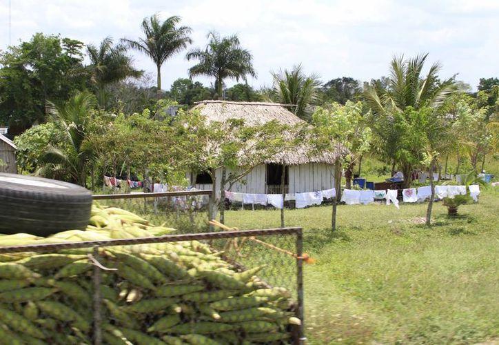 Con los recursos de este año se beneficiará a campesinos de 30 comunidades. (Ángel Castilla/SIPSE)