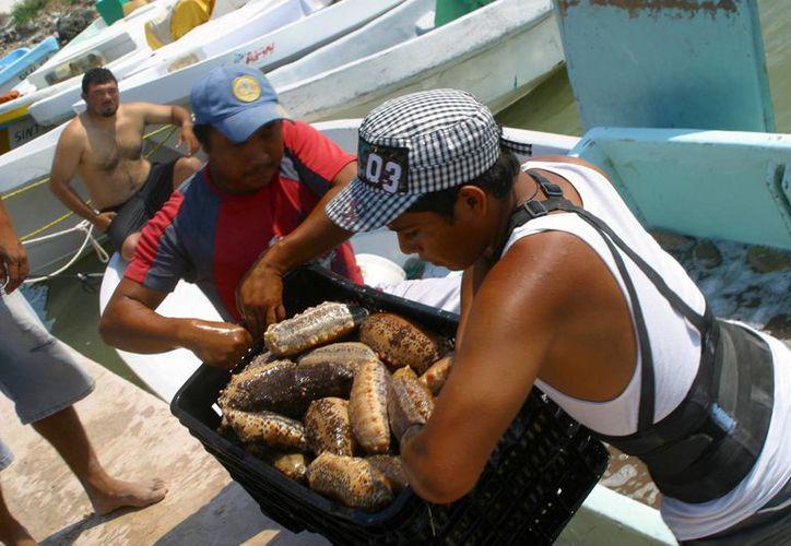 Poco menos de 500 improvisados buzos yucatecos han fallecido por carecer del adiestramiento necesario para ejercer dicha labor. (Archivo/Notimex)