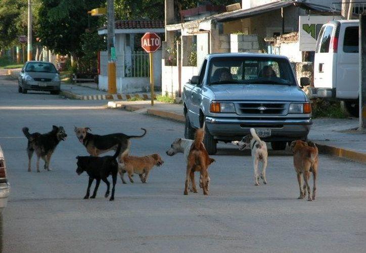 """Los """"callejeritos"""" afectan imagen de la ciudad, aseguran. (Manuel Salazar/SIPSE)"""