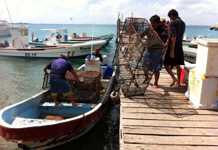 Los pescadores organizados alcanzaron una captura importante. (Ernesto Neveu/SIPSE)