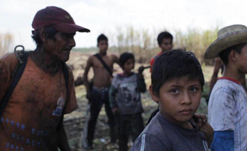De acuerdo con la Organización Mundial de la Salud 24,000 centroamericanos han muerto por causas relacionadas con la insuficiencia renal. En la imagen, trabajadores de la zafra, en Guatemala, país que colinda con El Salvador. (plazapublica.com.gt)