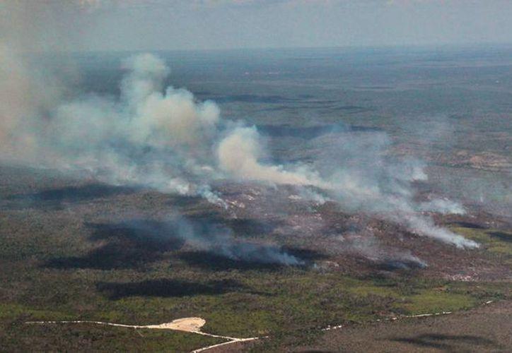 La Conafor controla los incendios que se activaron en Lázaro Cárdenas y Felipe Carrillo Puerto. (Cortesía)