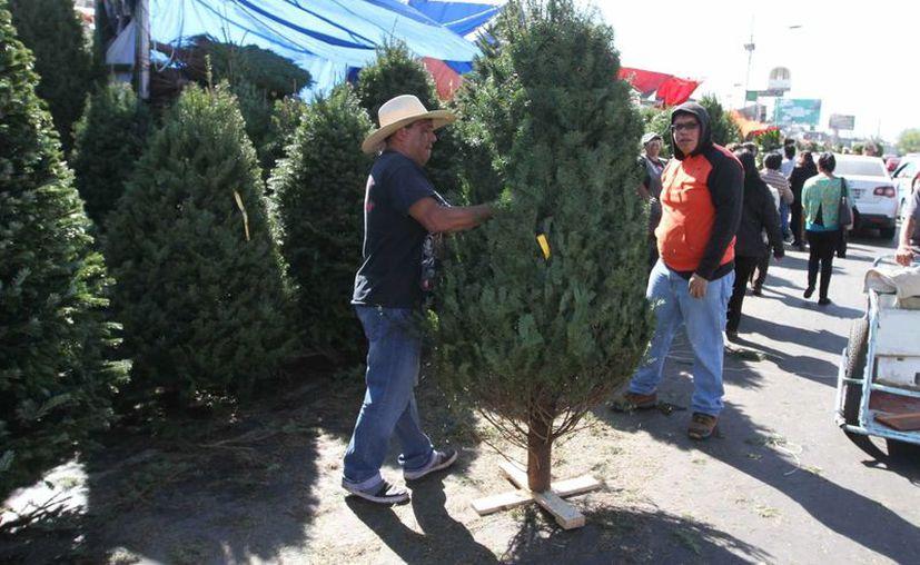 El Ayuntamiento de Mérida abrió 9 centros de acopio para los desechos de pinos navideños. Se espera en esta ocasión superar los 2,838 árboles recolectados tras la Navidad de 2012. (SIPSE)