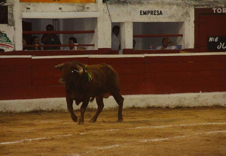 Hay ganaderías que estarán en la mira, ya que falsificaron documentos relacionados con los toros. (Milenio Novedades)