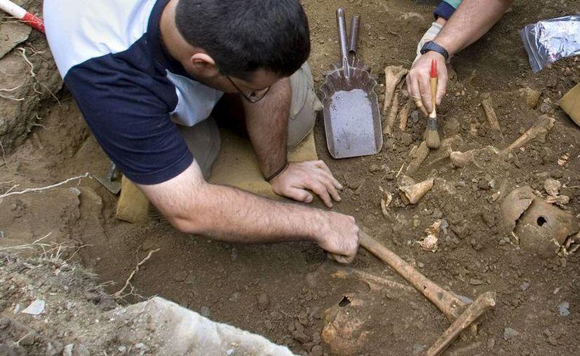 El esqueleto muestra fracturas en los brazos y una clavícula. (EFE)