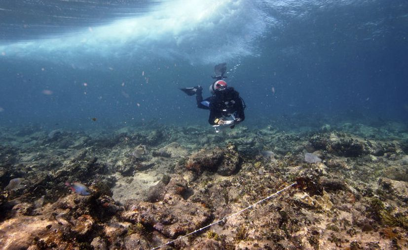 Se degrada el hábitat de los arrecifes producto del cambio climático. (Cortesía/Lorenzo Álvarez Filip)
