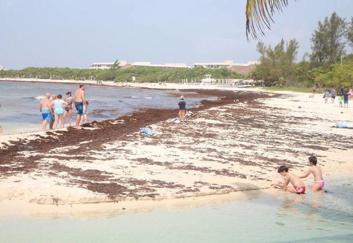 La Asociación de Hoteles reporta que ya comenzaron las cancelaciones y cambios debido al sargazo en las playas. (Adrián Barreto/SIPSE)
