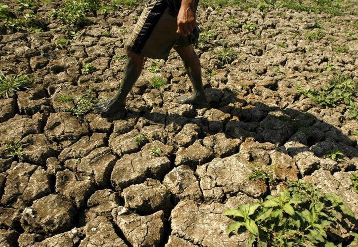 Un agricultor filipino pasa por un campo totalmente seco debido a la sequía provocada por el fenómeno atmosférico de 'El Niño'. (Archivo/EFE)