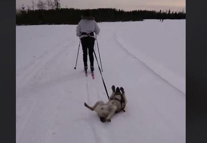 En la grabación, se puede ver a Warro rodando en la nieve y aparentemente negándose a levantarse. (Foto: Captura)