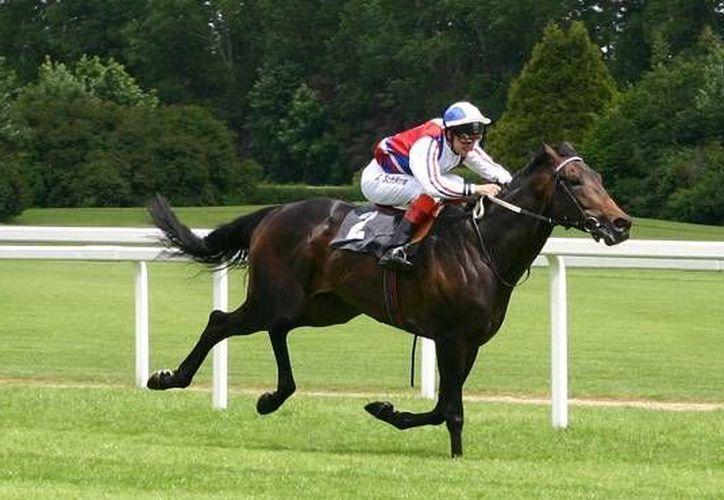 Muchos en la industria de las carreras creían que la velocidad de los caballos pura sangre había llegado a su límite. Imagen de contexto. (bioblogia.com)