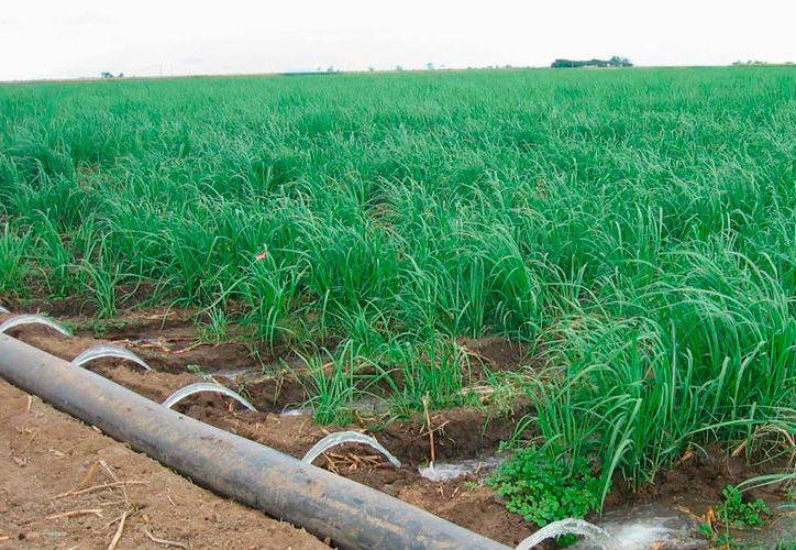 Las obras para sistemas de riego en la zona cañera fueron concesionadas a empresas foráneas que no las han cocnluido. (Foto: Juan Rodríguez / SIPSE)