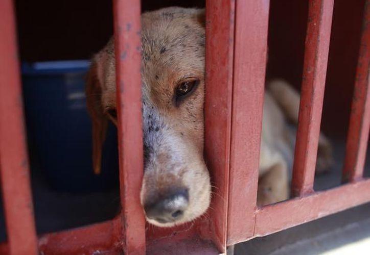El Centro de Control Canino informó que ese mismo día darán a conocer cuántos de los canes se encuentran sin enfermedades. (Archivo/AP)