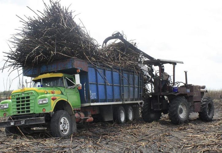 Actualmente se reportan 990 mil toneladas de caña cosechadas en campo. (Edgardo Rodríguez/SIPSE)