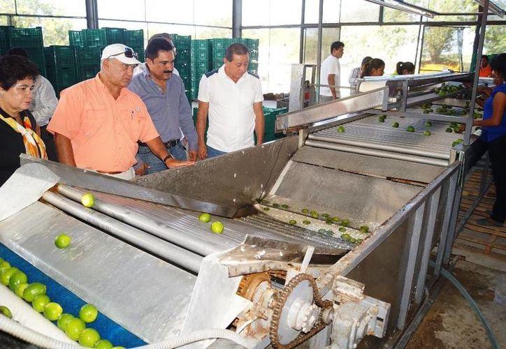 La empacadora de limón persa Citrisur, Sociedad de Producción Rural está establecida en el ejido Juan Sarabia. (Edgardo Rodríguez/SIPSE)
