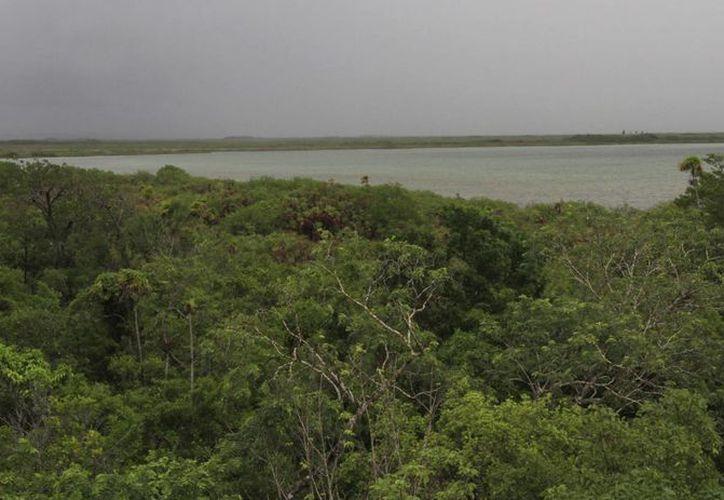 La superficie estudiada mide más de 5 millones de hectáreas. (Luis Soto/SIPSE)