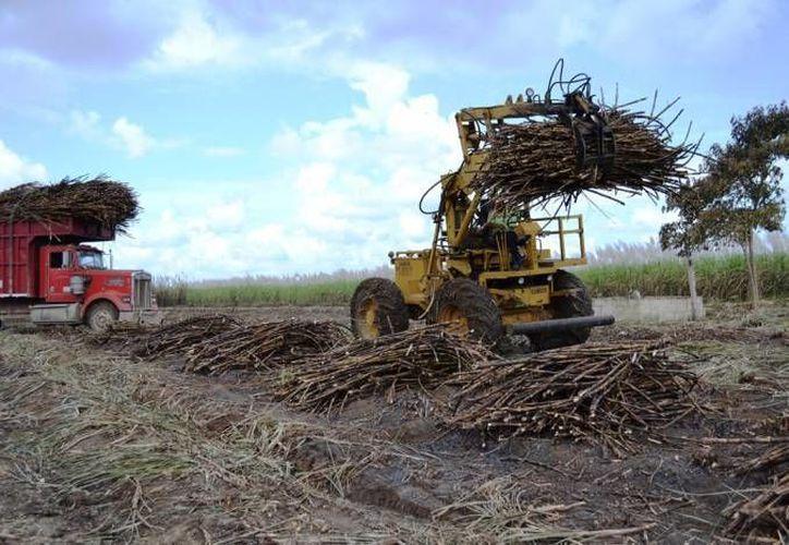 El representante de la organización dijo que hasta el momento no se han tenido días de retraso en la producción de caña. (Redacción/SIPSE)