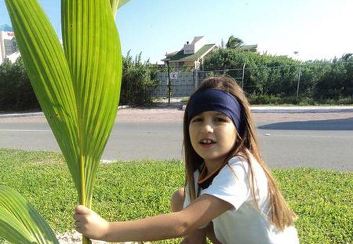 Para el 2014 se espera plantar: chicozapote, el guayacán, el ciricote, chacá, ramón, la majagua y también mangle rojo, blanco, negro y botoncillo. (Redacción/SIPSE)