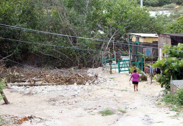 Habitantes de la zona de la ciénega han destruido mangle en su afán de ganarle terreno a la laguna. (Gerardo Keb/Milenio Novedades)