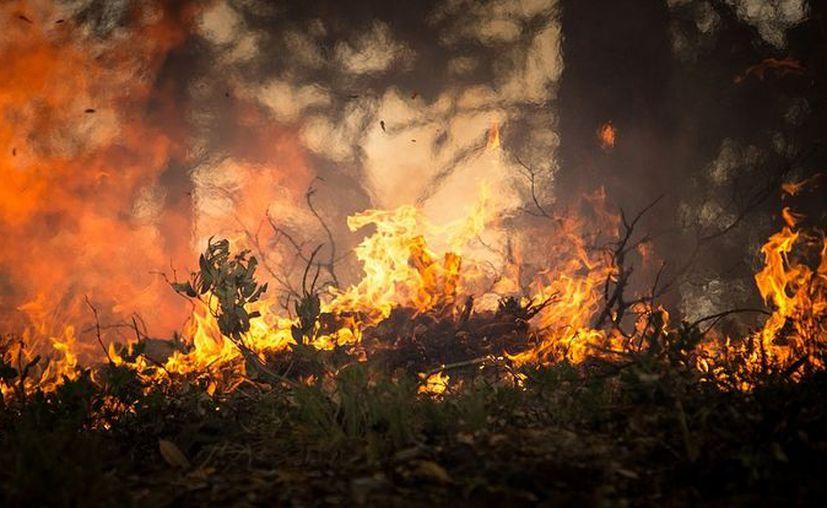 Más de cinco kilómetros y 300 construcciones han sido arrasadas por el fuego. (Pixabay)